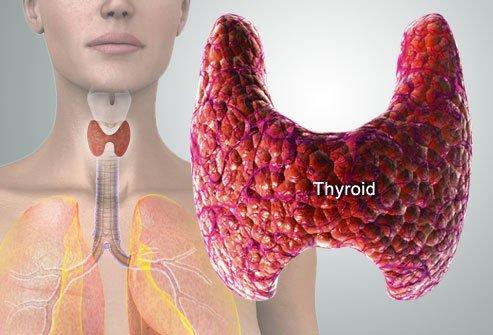 Щитовидна жлеза