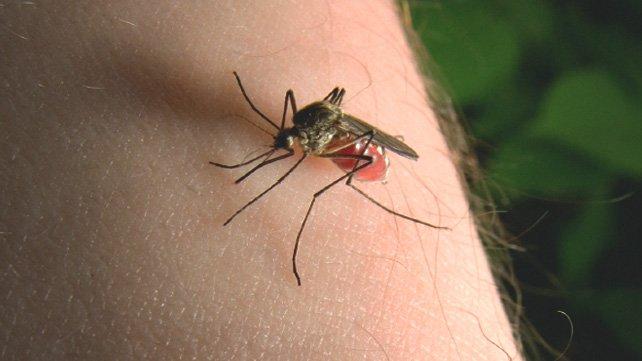 ухапване-от-комари- 642x361