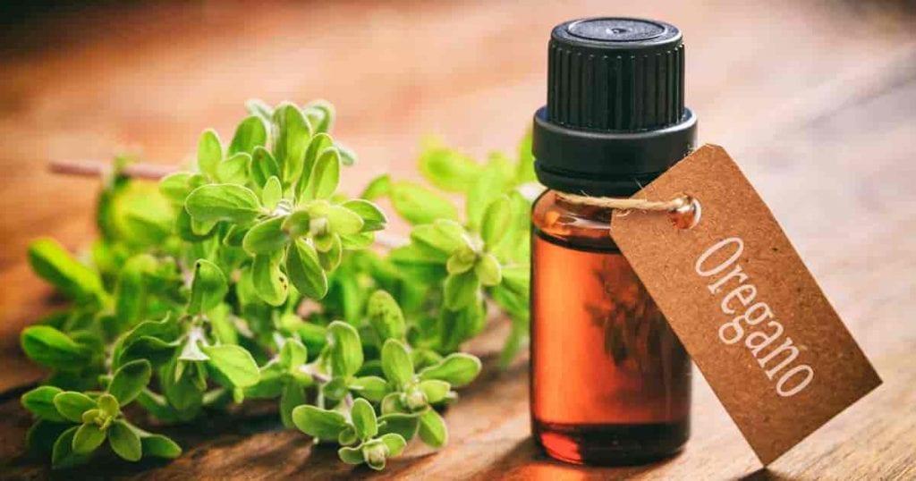 масло-от-риган-ползи-лечение