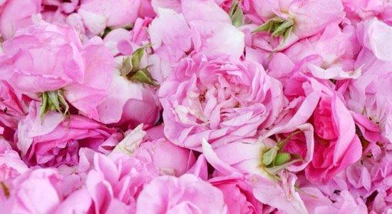 ползи-за-здравето-розово-масло-550x300
