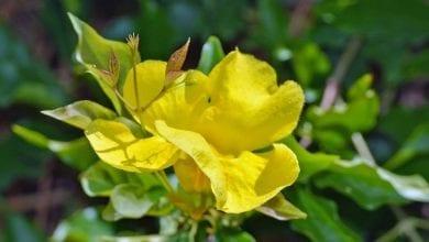 Photo of Котешки нокът – 6 научно доказани ползи от билката