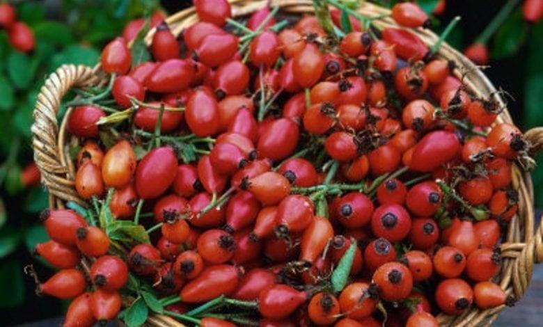 Photo of Шипка – незаменимата билка при грип и простуда. Чай.