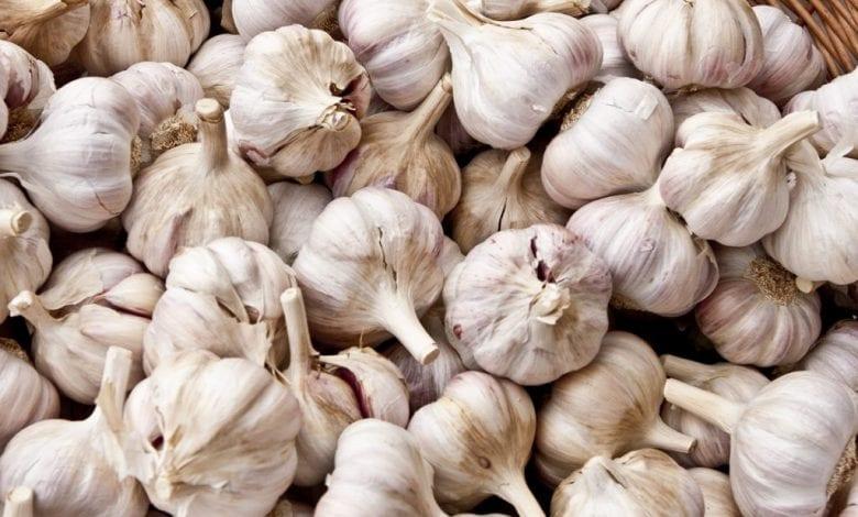 11 доказани с проучвания ползи от чесъна