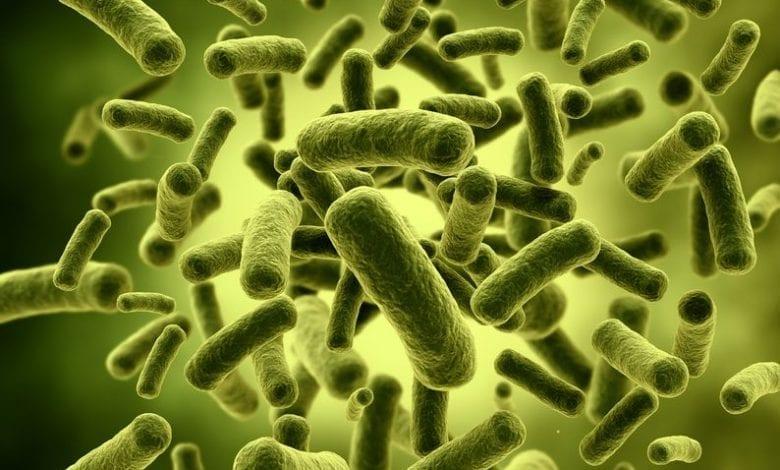 Photo of Ползи от пробиотици: Храни и Хранителни добавки