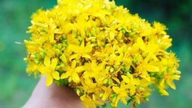 Photo of Жълт кантарион за лечение на депресия: Ползи и странични ефекти