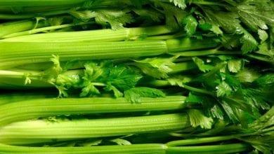 Photo of 10 ползи от супер зеленчука целина + хранителни факти и рецепти