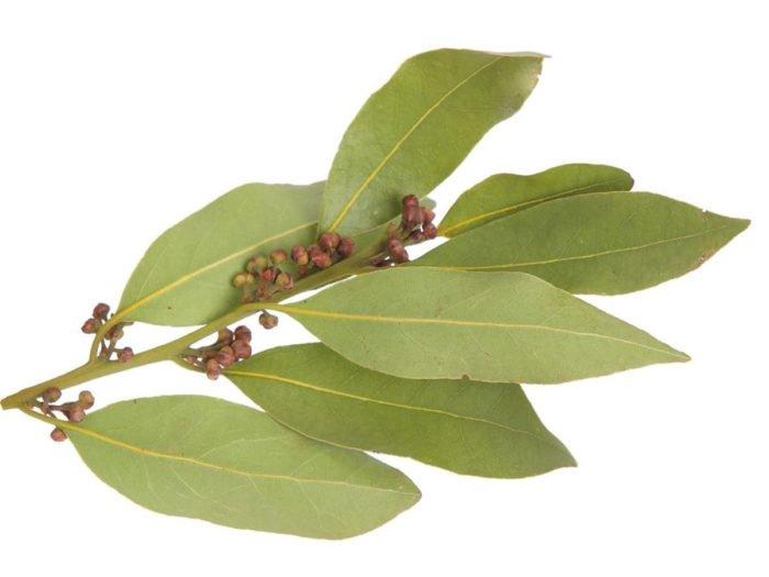 Photo of 8 топ ползи от Дафинов лист – за крака, болки в ставите и още