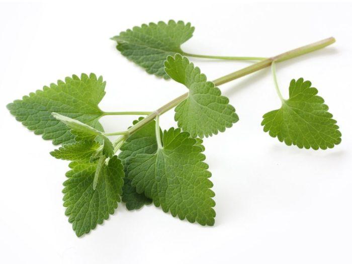 Photo of Коча билка ( Валериан ): 9 невероятни ползи за здравето