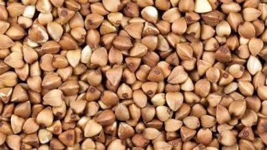 Photo of Елда – най-здравословната храна в света: ползи и приложение