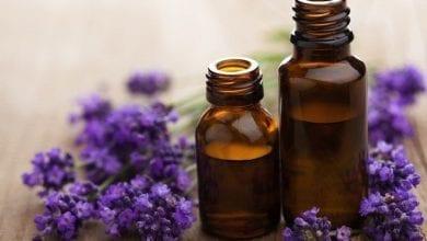 Photo of Лавандулово масло: За косопад и лечение. Над 15 ползи за Здравето