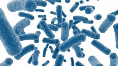 Photo of Пробиотици: разберете за ползите и страничните ефекти