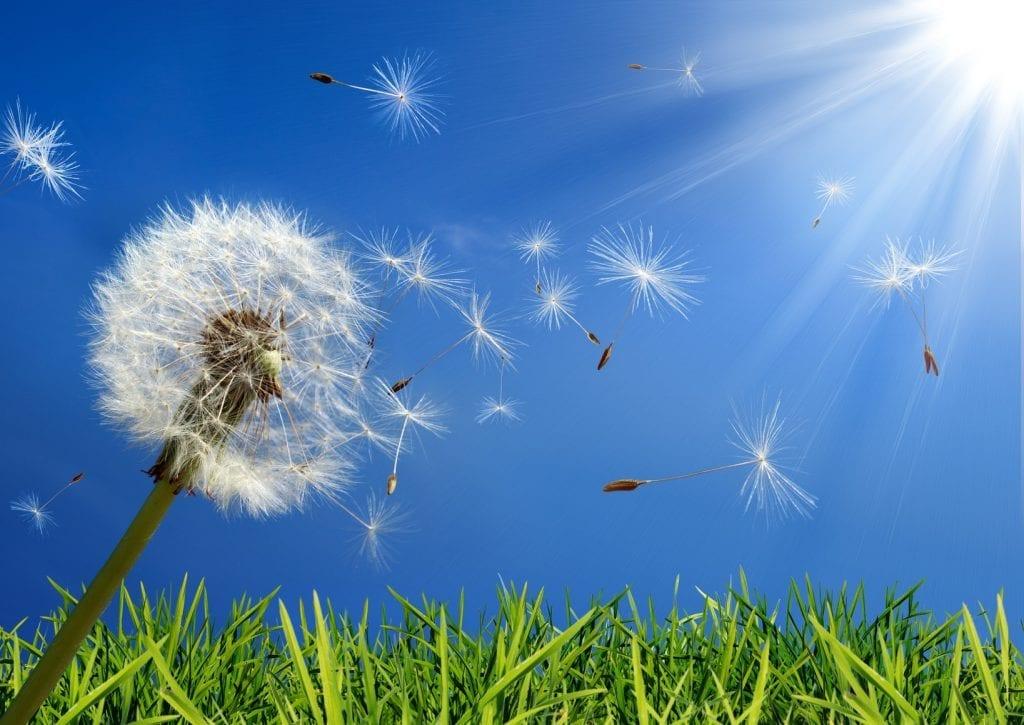 сезонна-алергия-причини-лечение