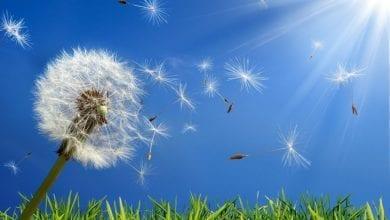 Photo of Сезонни алергии – Причини, симптоми и лечение