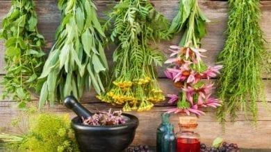 Photo of Топ 51 билки и подправки за добро здраве и изцеление