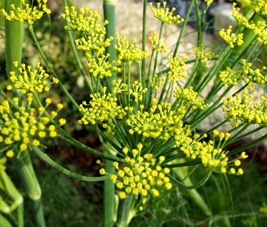 8-билки-които-детоксират-вашето-тяло-естествено-резене
