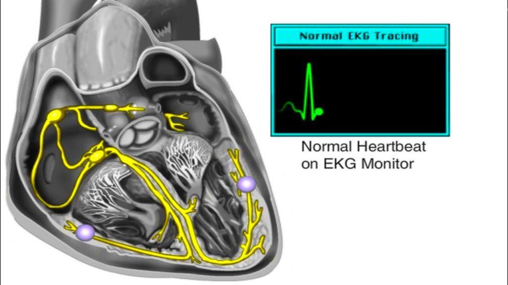 Електрическата система на сърцето