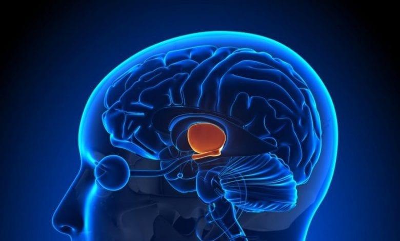 Photo of Хипоталамус: Анатомия, функция, диаграма, състояния, здравни съвети