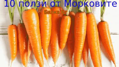 Photo of 10 ползи от Морковите: лечебни свойства и противопоказания
