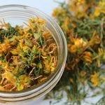10 невероятни ползи на жълтия кантарион