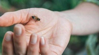 Photo of Ужилване от пчела: какво да правим и какво работи?