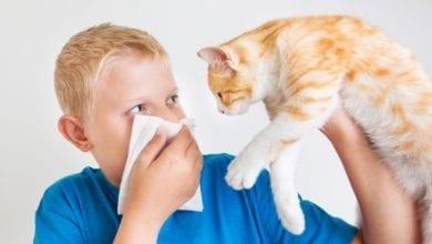 Алергии към животни