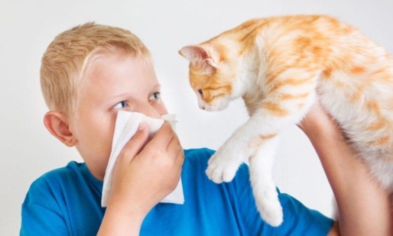 Photo of Алергии към животни