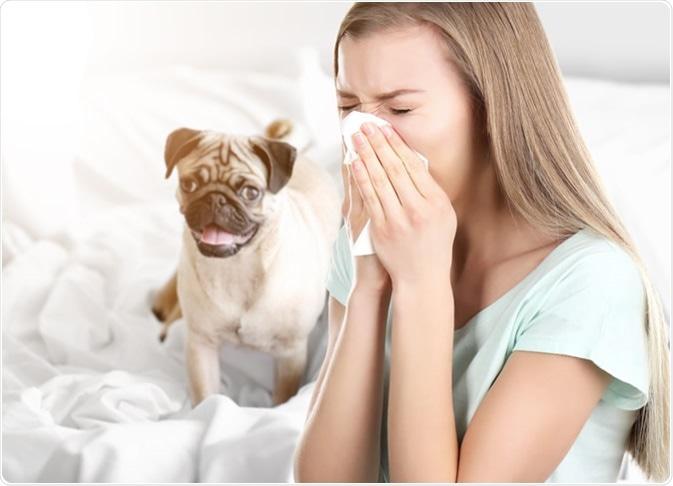 Алергии към кучета