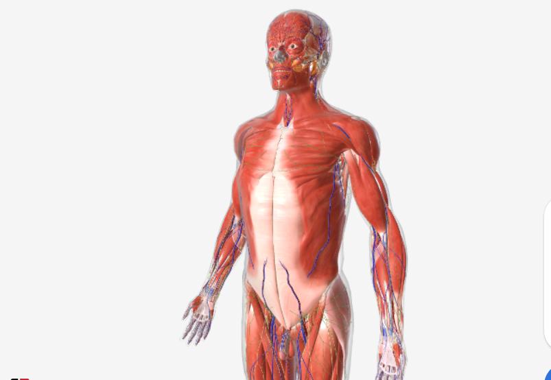 Аматомия на Човешкото тяло