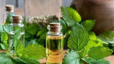 Етерично масло от маточина: 7 Ползи и приложения